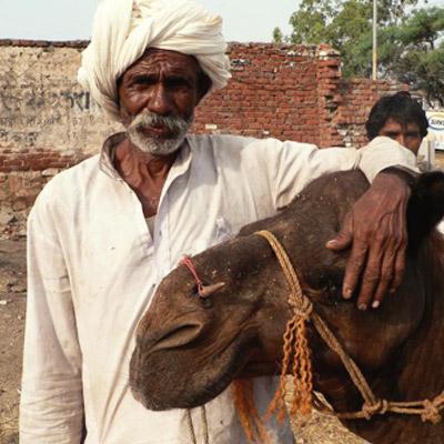 his_camel_rescue