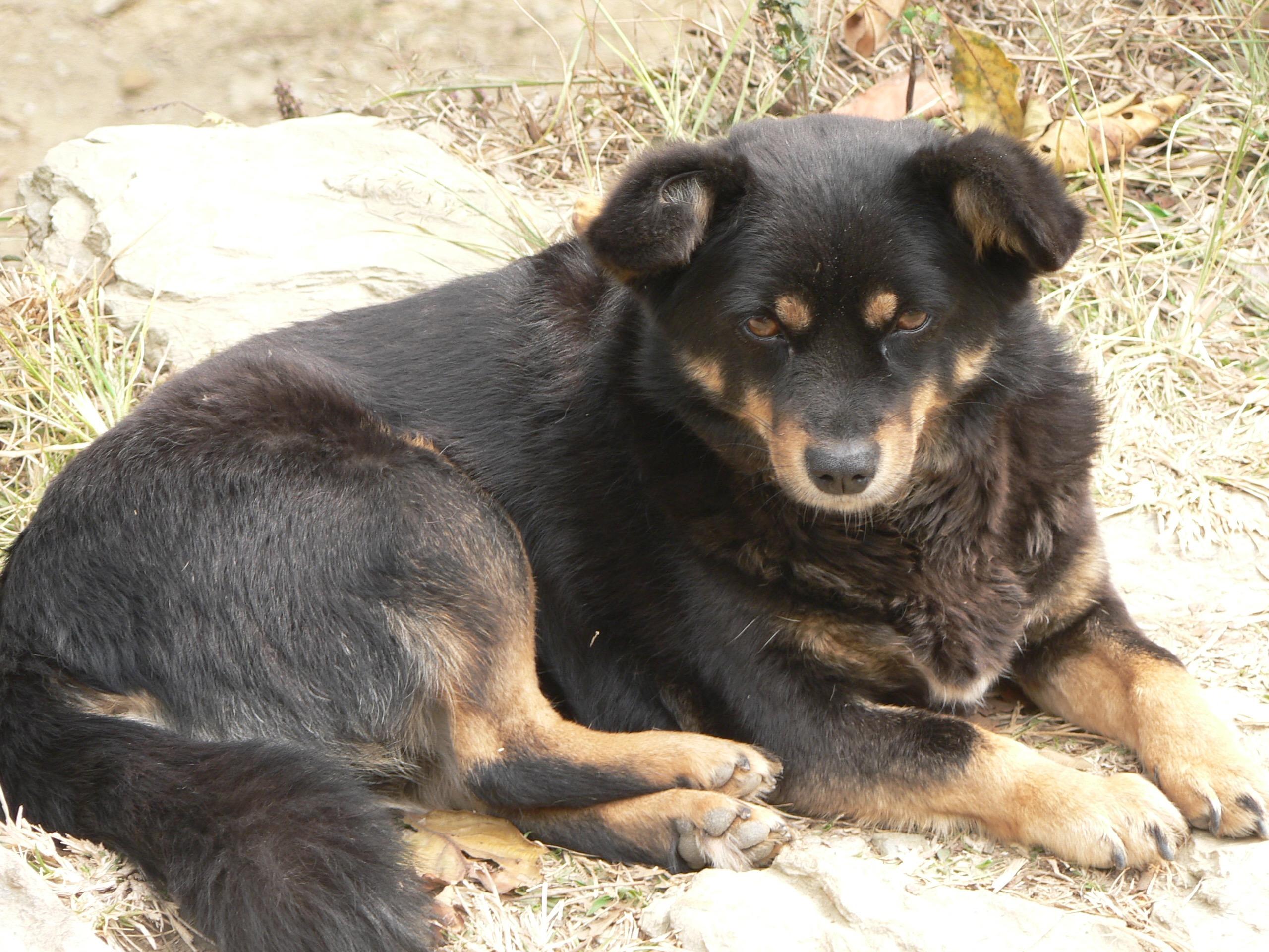 Rescued dog 2 KAS