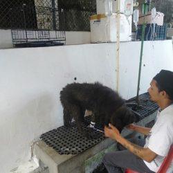 Saving Blacky, the dog