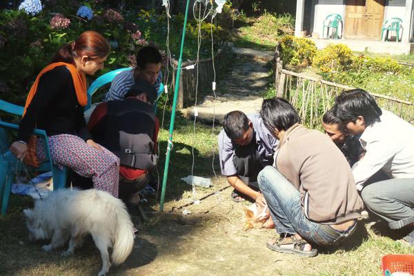 Kalimpong-Animal-Shelter-(KAS)