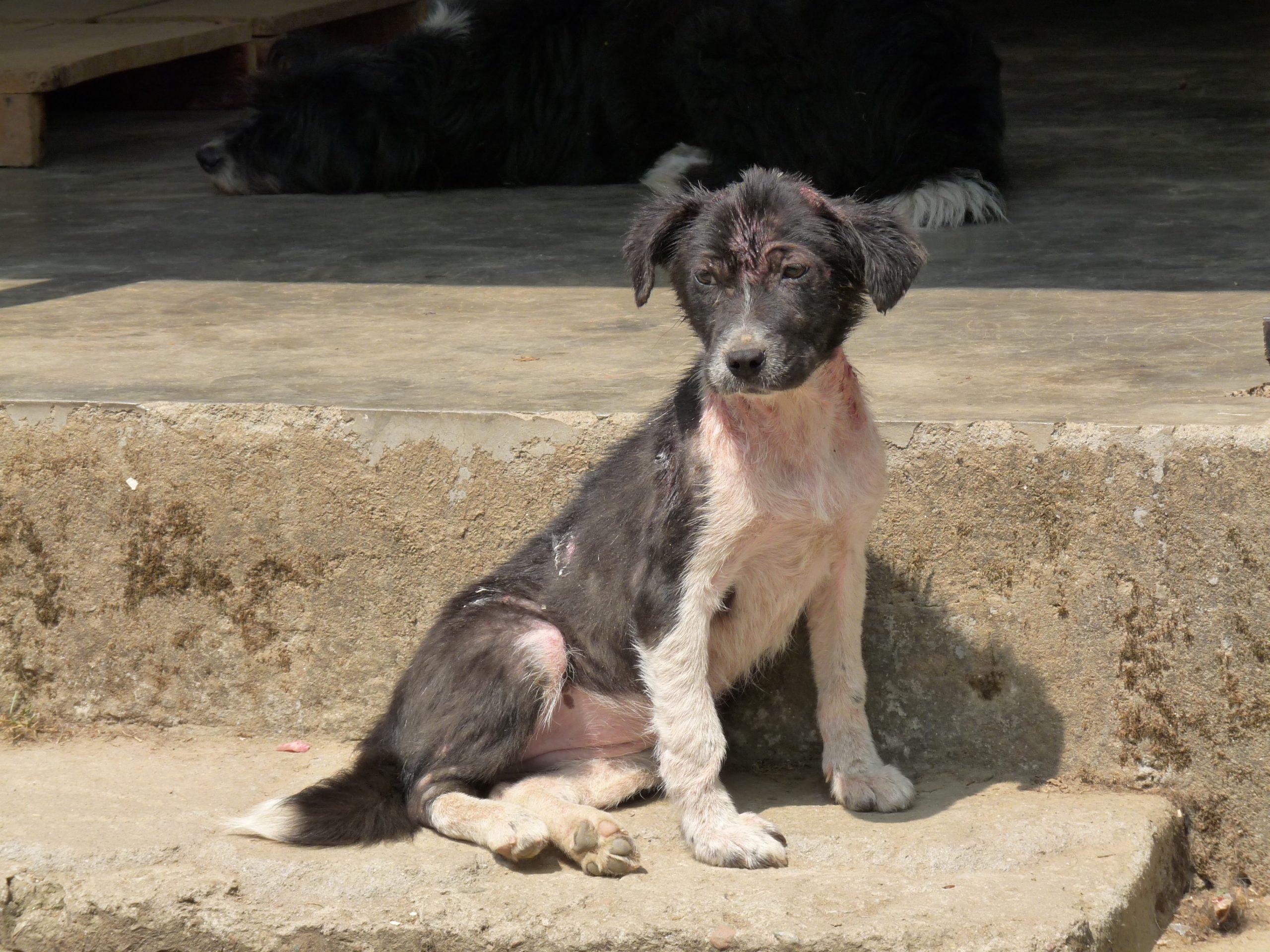 Rescued pup KAS