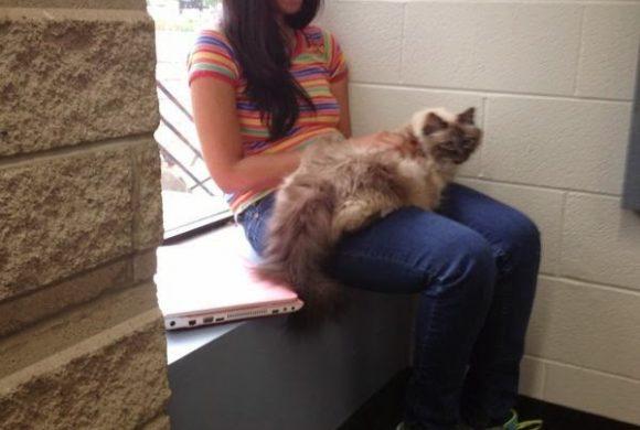 A new vet for Darjeeling Animal Shelter