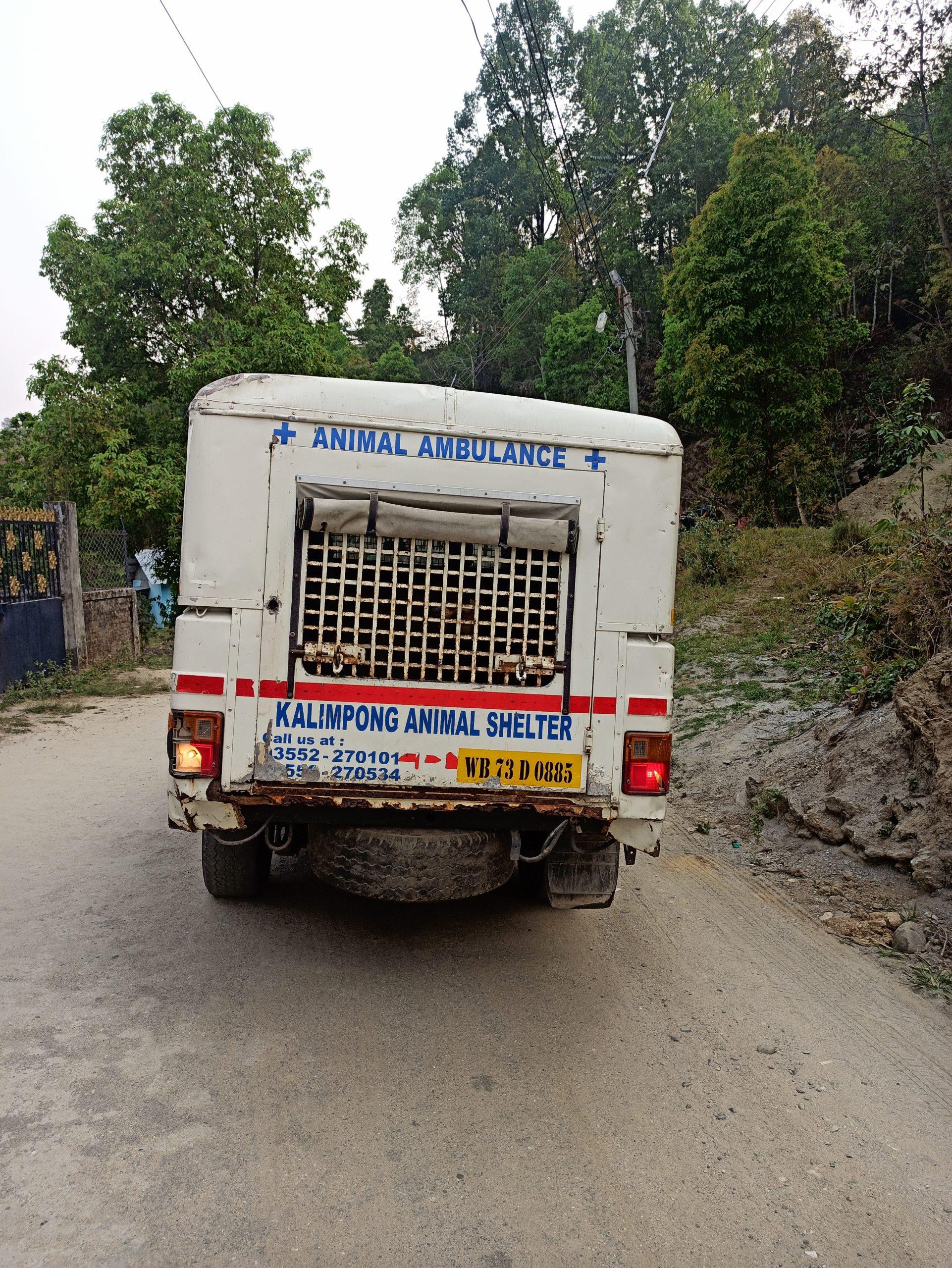 Animal Ambulance carrying a rescue dog