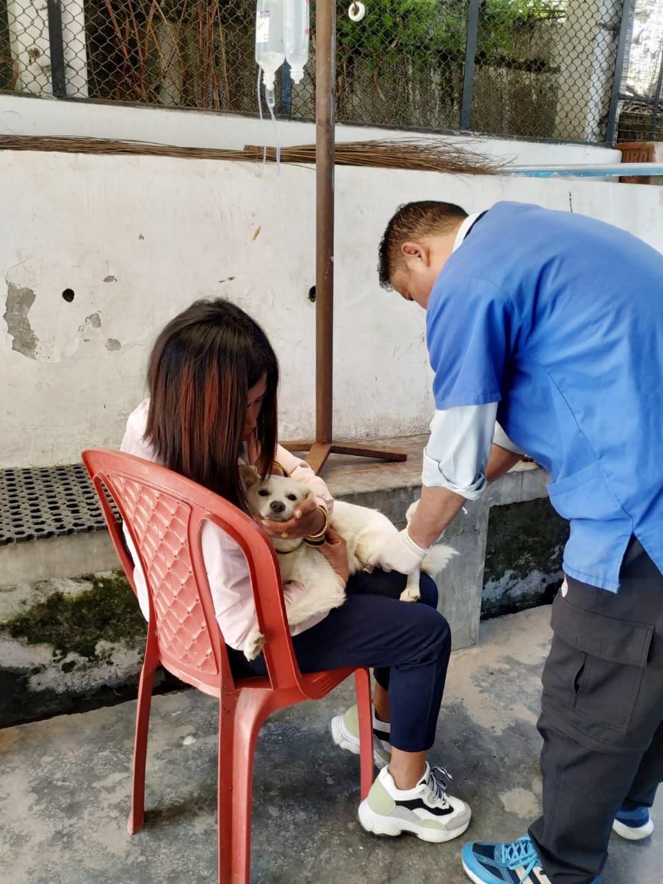 Mr. Wangel treating a sick dog at DAS